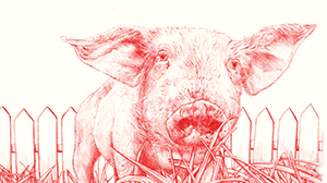 Pig_in_the_garden_feature_size
